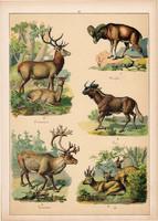 Szarvas, őz, gnú, rénszarvas, gímszarvas, litográfia 1899, eredeti, 24 x 34 cm, nagy méret, állat