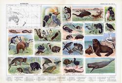 Ausztrália állatvilága, színes nyomat 1909, eredeti, 32 x 47, német nyelvű, állat, kenguru, madár