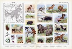 Ázsia állatvilága, színes nyomat 1909, eredeti, 32x47, német nyelvű, állat, elefánt, bivaly, tigris
