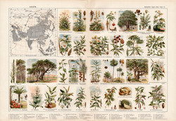 Ázsia növényvilága, színes nyomat 1909, eredeti, 32 x 47, német nyelvű, növény, mangó, bambusz