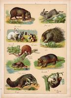 Nyúl, sül, lajhár, hangyász, tatu, tobzoska, litográfia 1899, eredeti, 24 x 34 cm, nagy méret, állat