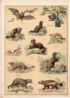 Denevér, hermelin, nyuszt, menyét, vidra, litográfia 1899, eredeti, 24 x 34 cm, nagy méret, állat