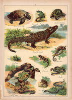 Gyík, kígyó, teknős, krokodil, béka, sikló, litográfia 1899, eredeti, 24 x 34 cm, nagy méret, állat