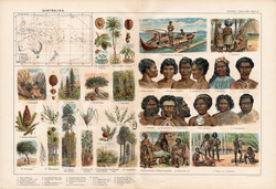 Ausztrália növényvilága és népfajai, színes nyomat 1909, eredeti, 32 x 47, német nyelvű, növény, nép
