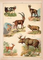 Jávorszarvas, kecske, gazella, juh, zerge, litográfia 1899, eredeti, 24 x 34 cm, nagy méret, állat