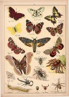 Pillangó, lepke, pók, skorpió, kullancs, litográfia 1899, eredeti, 24 x 34 cm, nagy méret, állat