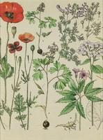 1E040 Keretezett régi gyógynövény tábla 30 x 24 cm