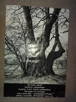 Dr.Vajda Ernő kiállítás plakát, méret jelezve!