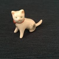 Aquincum pici macska, cica, ritka