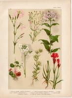 Magyar növények (27), litográfia 1903, színes nyomat, virág, szegfű, szikárka, szappanfű, kőrontó