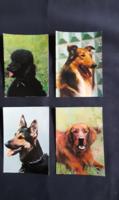 Képeslap (kutyák)