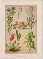 Magyar növények (19), litográfia 1903, színes nyomat, virág, len, harmatfű, borbolya, istánczfű