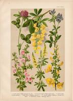 Magyar növények (46), litográfia 1903, színes nyomat, virág, somkóró, iglicz, lóhere, lucerna, zanót