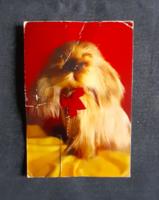 Képeslap (kutya)