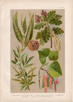 Magyar növények (61), litográfia 1903, színes nyomat, virág, gesztenye, tölgy, fűz, nyár, fa