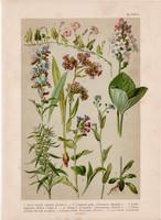 Magyar növények (9), litográfia 1903, színes nyomat, virág, atraczél, gyöngyköles, vidrafű, szulák