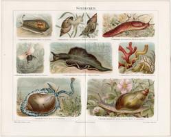 Csigák, litográfia 1898, német nyelvű, eredeti, színes nyomat, erdő, csiga, víz, Elysia viridis