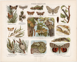 Pillangó, lepke II., litográfia 1898, német nyelvű, eredeti, színes nyomat, erdő, báb, hernyó