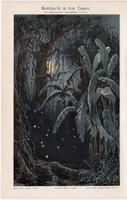 Trópusi erdő éjjel, litográfia 1894, német nyelvű, eredeti, színes nyomat, fa, trópus, erdő