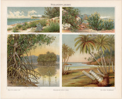 Vízparti növények, litográfia 1898, német nyelvű, eredeti, színes nyomat, növény, fa, virág, tenger