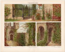 Kúszónövények, litográfia 1898, német nyelvű, eredeti, színes nyomat, növény, virág, ház, futónövény