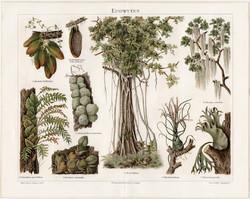 Epifitonok, álélősködők, litográfia 1894, német nyelvű, eredeti, színes nyomat, növény, erdő