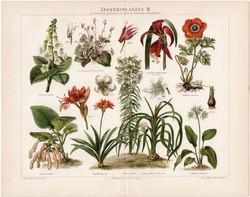 Szobanövények II, litográfia 1898, német nyelvű, eredeti, színes nyomat, növény, virág, beltéri