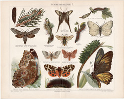 Pillangó, lepke I., litográfia 1898, német nyelvű, eredeti, színes nyomat, erdő, báb, hernyó