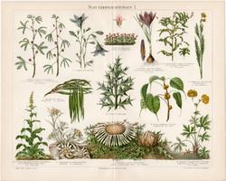 Virágok, növények I., litográfia 1898, német nyelvű, eredeti, színes nyomat, növény, virág