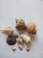 Tengeri csiga-kagylo 1