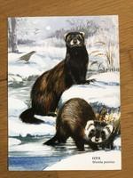 Állatos képeslap - Görény