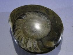 0A482 Megkövesedett tengeri csiga őskövület