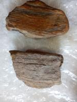 Fosszília megkövült fatörzs darabok (6)