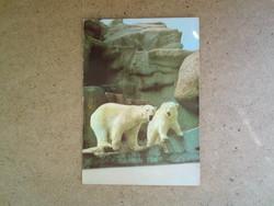 Régi képeslap - Jegesmedve pár