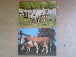 Régi állatos képeslapok