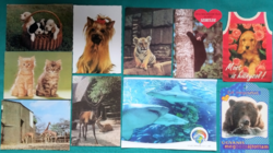 10 darab állatos postatiszta képeslap