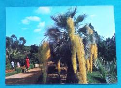 Spanyolország,Costa Brava,botanikus kert,használt képeslap