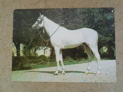Régi lovat ábrázoló képeslap