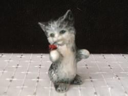 Bájos Goebel cica