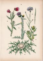 Benedekfű, bogáncs, szamárbogáncs, bábakalács, búzavirág litográfia 1884, növény, virág