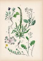 Vadretek, tengerparti tátorján, festő rezeda, sovány ibolya litográfia 1884, német, növény, virág