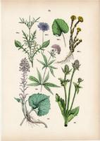 Erdei mácsonya, ördögszem, sédkender, acsalapu litográfia 1884, német, eredeti, növény, virág