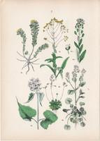 Kanálfű, ternye, erdei holdviola, daravirág, mezei tarsóka litográfia 1884, német, növény, virág