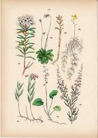 Tőzegrozmaring, csarab, mocsári molyűző, lápi hízóka, rence, körtike litográfia 1884, növény, virág