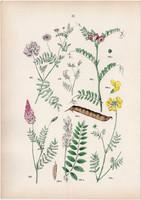 Hólyagos csűdfű, koronafürt, bükköny, csibeláb, patkófű litográfia 1884, német, eredeti, növény