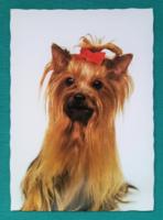 Állatos postatiszta képeslap - Yorkshire terrier