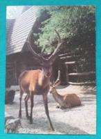 Állatos postatiszta képeslap - gímszarvas