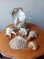 Hatalmas mérteű tengeri kagyló gyűjtemény