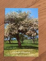 Virágzó FA, természet, évszak képeslap - 2