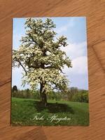 Virágzó FA, természet, évszak képeslap - 1